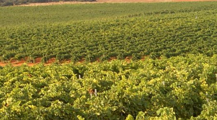Urge activar fondos adicionales para el sector vitivinícola