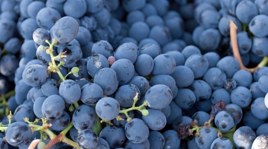 Agroseguro adelanta el pago por daños en uva de vino
